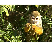 Spider Monkey on Monkey Island Photographic Print