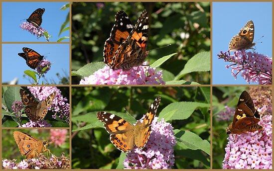 My Butterfly Bush ! by Trish Meyer