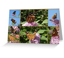 My Butterfly Bush ! Greeting Card