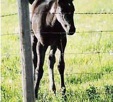 horse by David M. Bull