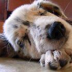 Sleeping Beauty by ctgponies