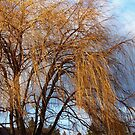 Winter Willow by rocamiadesign