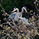 Herons and Cranes by David Friederich