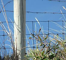 barbed wire by leARGH
