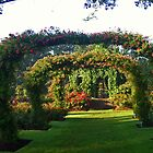 Rose Promenade, Elizabeth Park, West Hartford, CT by Kenric A. Prescott