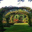 Rose Promenade, Elizabeth Park, West Hartford, CT by Kenric A. Prescott