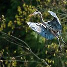 Heron Parachute by David Friederich