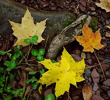 Maple and Clover by Christina Spiegeland
