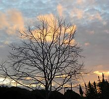 Kool Clouds With Tree by Sandra Gray