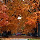 Autumn's Kiss by Sara Johnson
