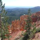 Views of Bryce Canyon with Trees in Foreground. by Mywildscapepics