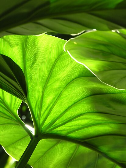 Green - Garfield Park Conservatory by BonnieJames