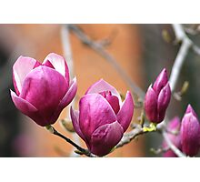 Blooms & Buds! Photographic Print