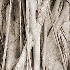 Boca Grande Banyan Tree by Sarah B. Locke