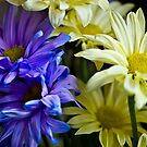 Gerber Bouquet by JHRphotoART
