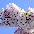Spring Bloom by Visual   Inspirations