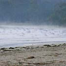 Silver Gulls in the Mist by Trish Meyer