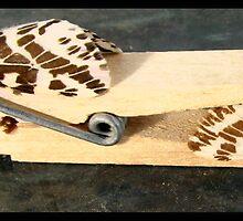 tiger moths by vampvamp