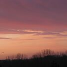 Sky Before Sun rise by Linda Miller Gesualdo