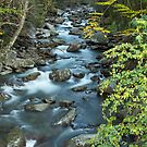 West Prong Little Pigeon River  by Gary L   Suddath