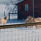Tired of the White Stuff by Barb Miller