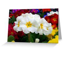 First primroses Greeting Card