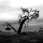 Sheoak, Kanmantoo, South Australia by jembot