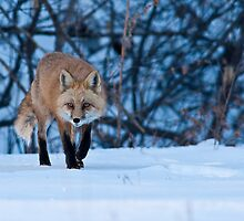 Stalking Around by Jay Ryser