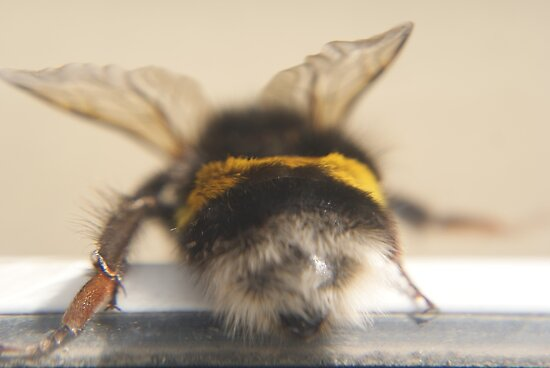 Bumble Bee 3 by Terri-Leigh Stockdale