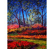 A Vibrant Day in Keukenhof Photographic Print