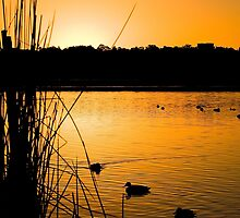 Lake Joondalup at dawn............. by Gordon Pressley