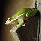 Florida Tree Frog by Christina Spiegeland