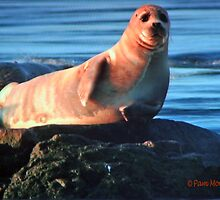 Seal Appeal by Pam Moore