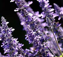 Lovely Lilac by Melanie Surplice