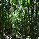 Tallebudgera Valley Rainforest by Murray Swift