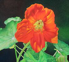 Nasturtium - Glowing with confidence by lanadi