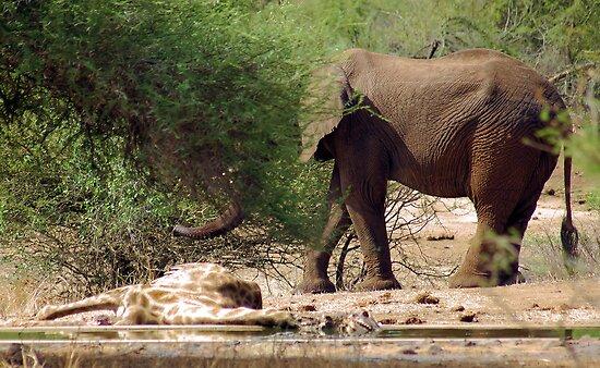ELEPHANT BEHAVIOUR - THE LIONS,ELPHANT,GIRAFFE AND THE CROCODILE by Magaret Meintjes