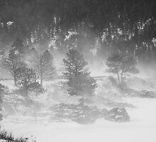 Boulder Canyon Meets Nederland  BW Landscape by Bo Insogna