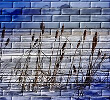 The Painted Wall by Vickie Emms