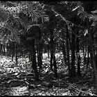 Tiny Forest by Alx-Iv