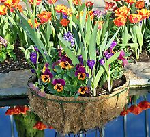Spring Basket & Reflections! by kodakcameragirl