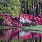 Blooming Reflection by Yvonne Powell