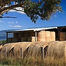 Summer Hay-Tasmania by Tim Wootton