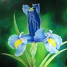 Blue Iris by lanadi