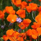 Wildflowers--Blue on Orange by wademcmillan