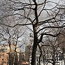 Tree in Union Square by Ashley Salazar