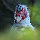 Beautifully ugly bird by trishie