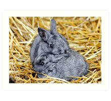 Grey Bunnies Art Print