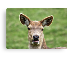 This is Jess the Deer Canvas Print