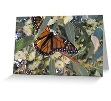 LANDING COMPLETED! Monarch butterfly. Mount Pleasant, Sth. Australia. Greeting Card